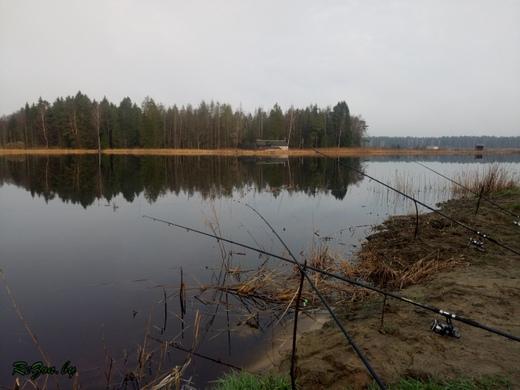 Рыбхоз Грицево - платная рыбалка в Беларуси (ловля карпа 04.04 ...