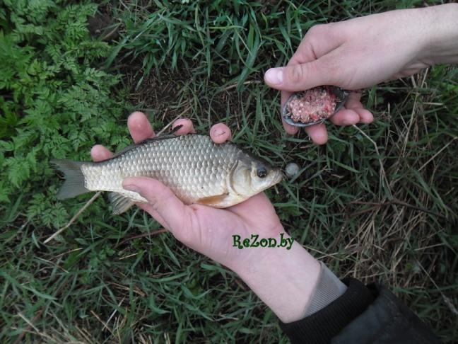 Рыбалка в дзержинске минской